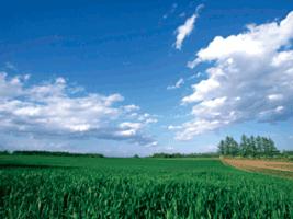 自然塗料 AURO(アウロ) 契約農家の写真1